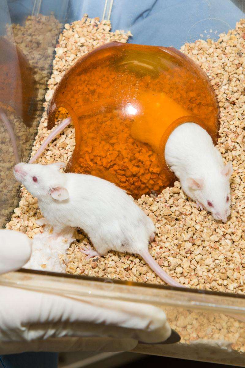 how to take care of mice