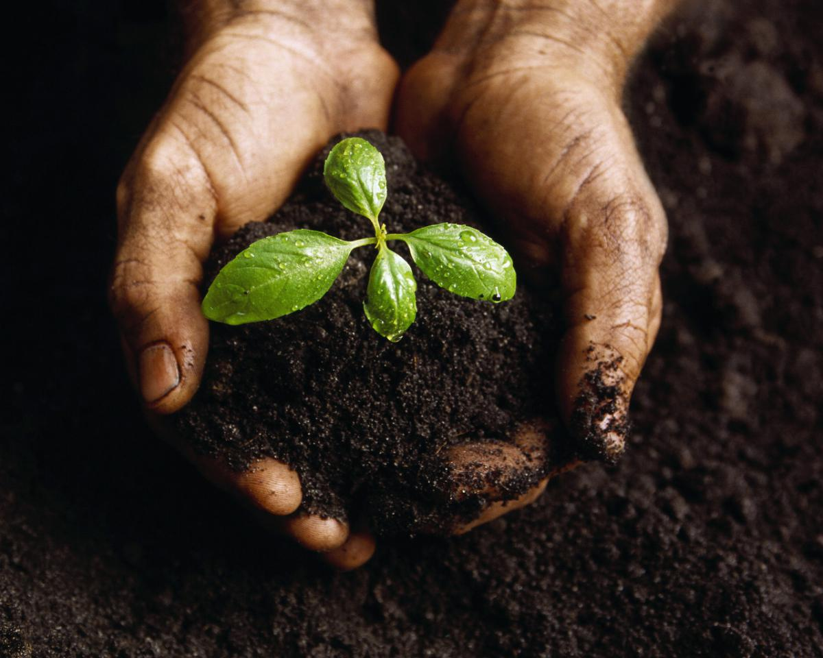 Hands holding a plant in soil