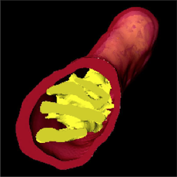 A 3D rendering of part of a mitochondrion.