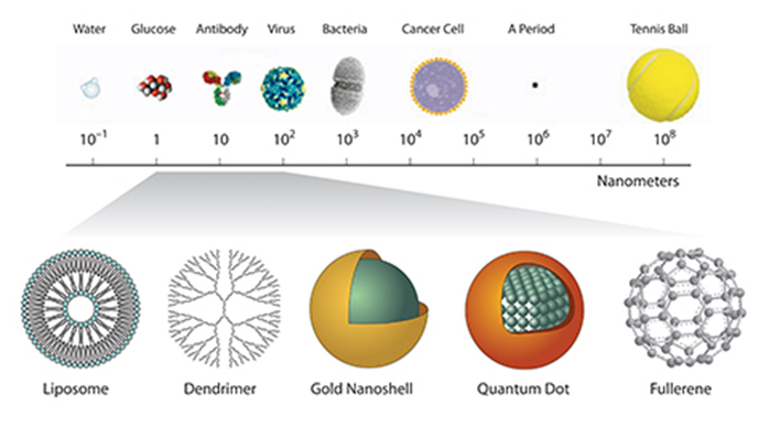 Nanoparticles are compared to various recognizable objects to gain an understanding of their relative size. Nanoparticles range in size from 1 to 200 nm in diameter, on the same scale as an antibody or virus particle. In comparison, the diameter of a water molecule is approximately 0.3 nm; a cancer cell, approximately 10,000 nm; the period at the end of this sentence, approximately 500,000 nm; and a tennis ball, approximately 66,000,000 nm. Liposomes, dendrimers, gold nanoshells, quantum dots, and fullerene