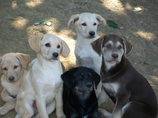 Kennedy fostered a litter of nine puppies that were only six days old when she got them. Here are just a few of that litter before they went on to their forever homes.