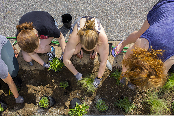 Members of BEElieve planting flowers near the library.