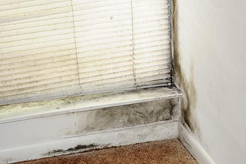 Photo of mold growing in the corner of a room
