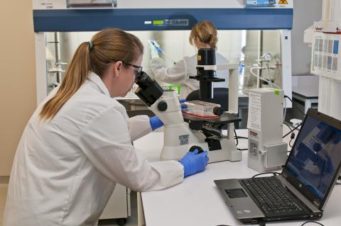 Technicians using microscopes.