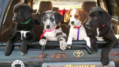 Rescue puppies homeward bound.