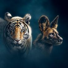 "Banner image for the BBC documentary ""Dynasties"""