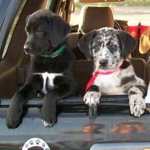 Rescue puppies homeward bound.