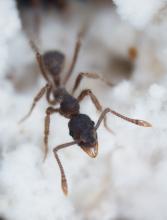 Ant in gravel